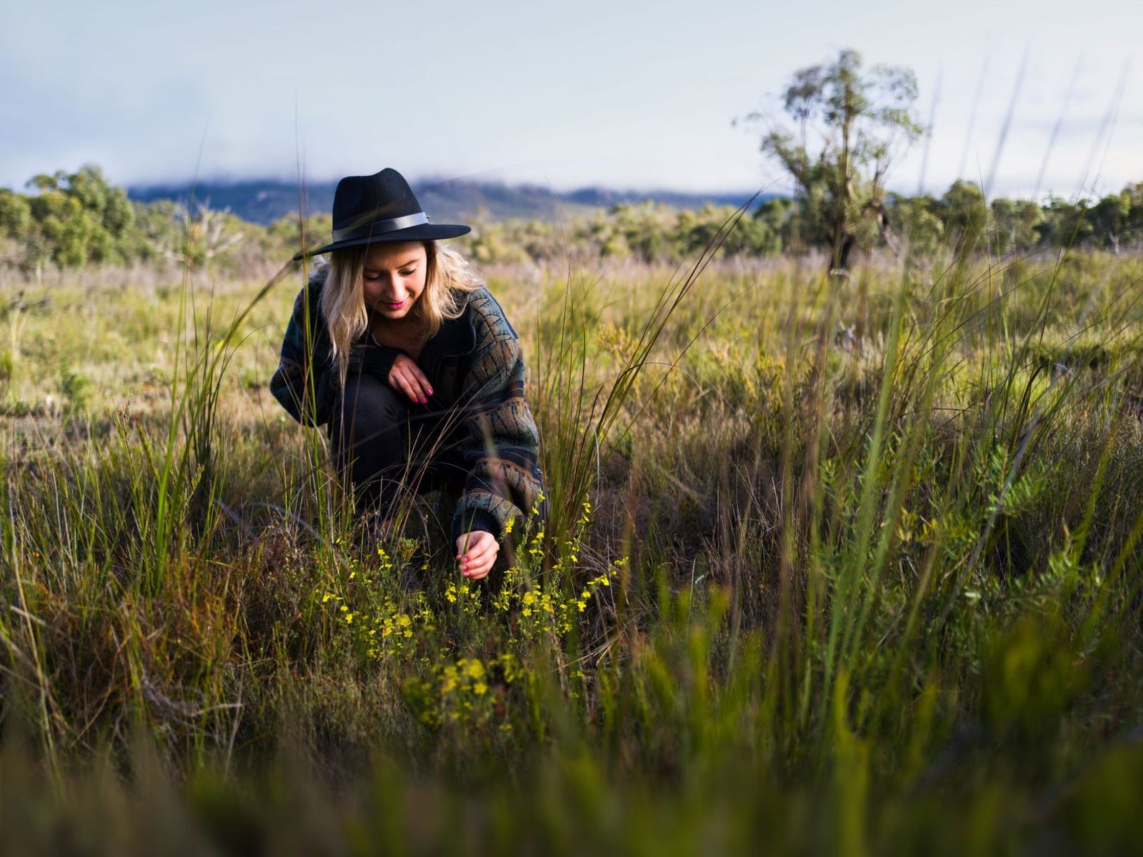 Image for Grampians Wildflower Show