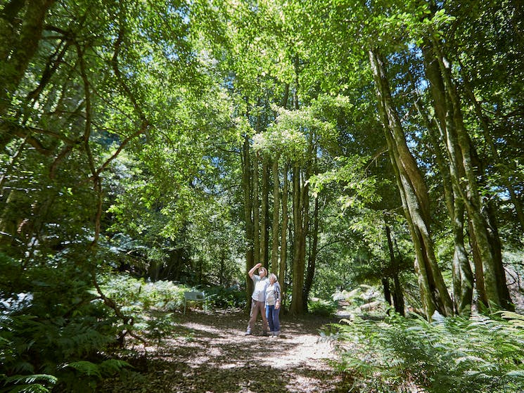 The Lady Nancy Fairfax or Jungle Walk is a wonderful place to escape the city and the heat