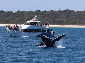 Whalesong Cruises - Whale Watching in Hervey Bay