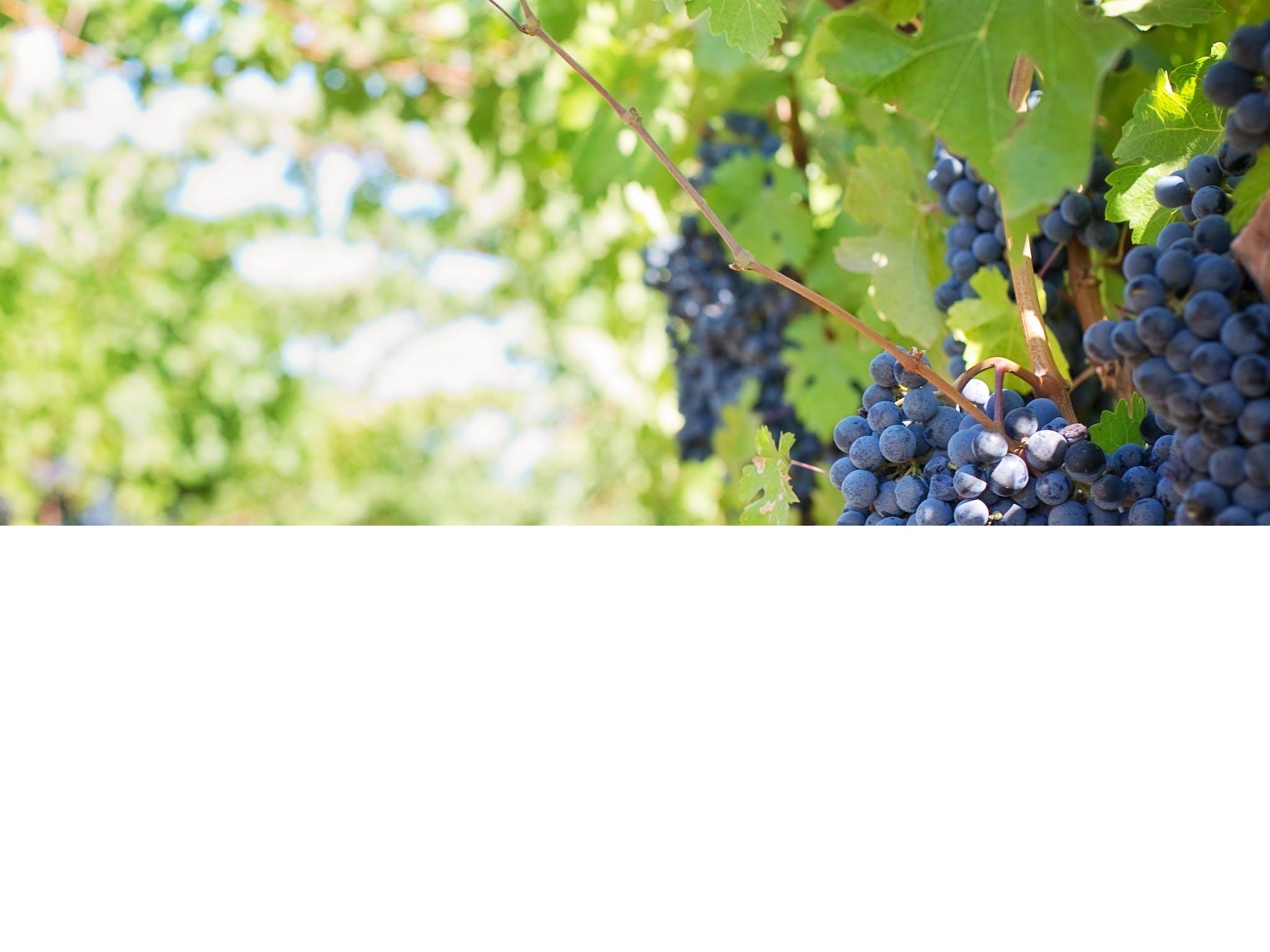 Aldinga Bay Winery