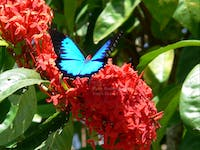 Daintree with Tony's Tropical Tours