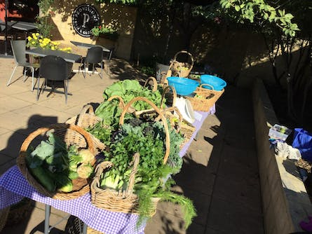 Cool Climate Chemical Free Vegetable Growing Workshop