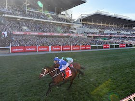 Winx racing at The Valley