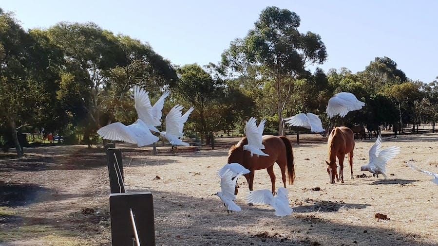 Guided walk through Lefevre Park  Nantu Wama Park 6