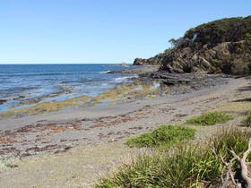 Honeysuckle Beach Walking Track