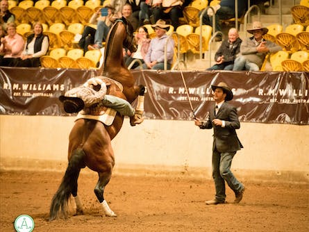 The Australian Stock Horse Society National Show
