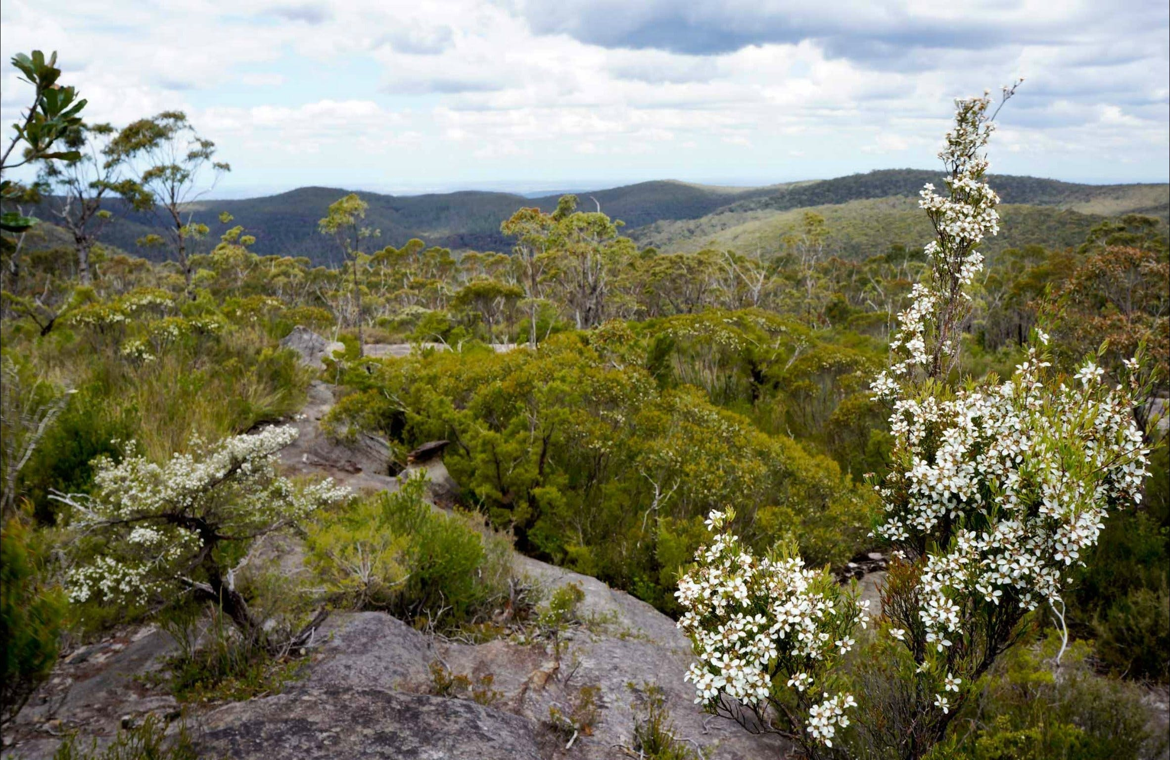 Murphys fire trail – Woodford to Murphys Glen campground