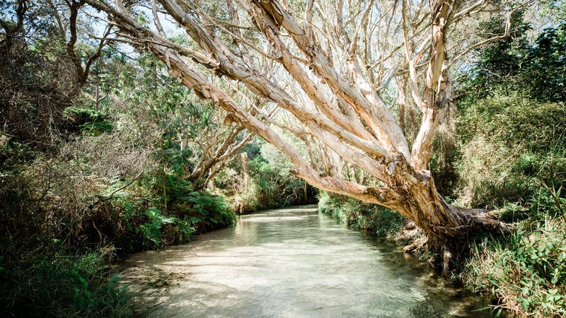 Fraser Island Day Tours with Kingfisher Bay Resort