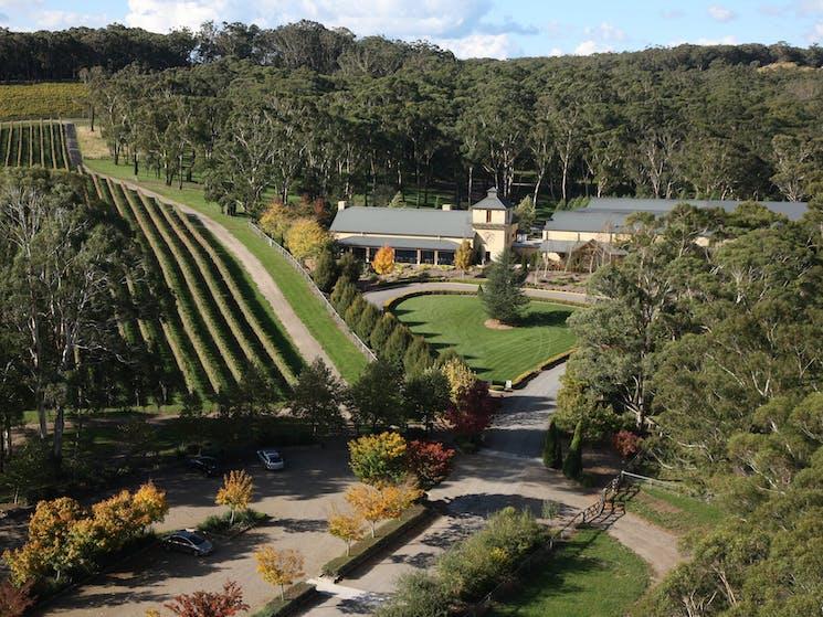 Centennial Vineyard Aerial