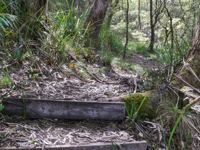 Tea Tree Falls Walking Track