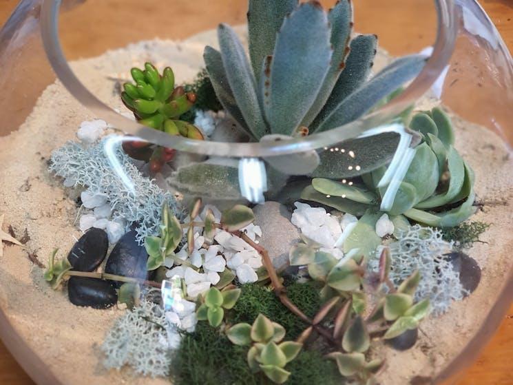 sydney, terrarium, fun, workshop, succulents