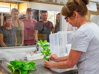 guided laboratory tour breeding laboratory with caterpillars at the australian butterfly sanctuary