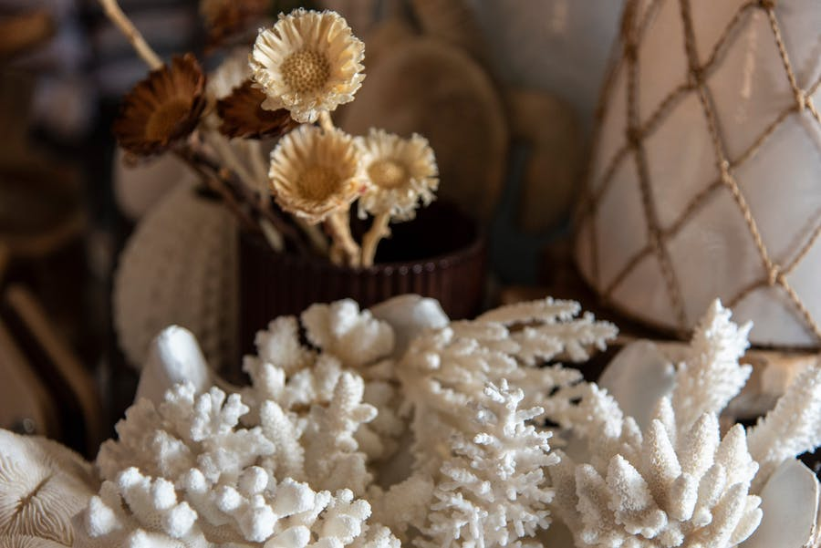 Coral Specimens, large & small..