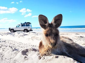 4WD G'day Adventure Tours