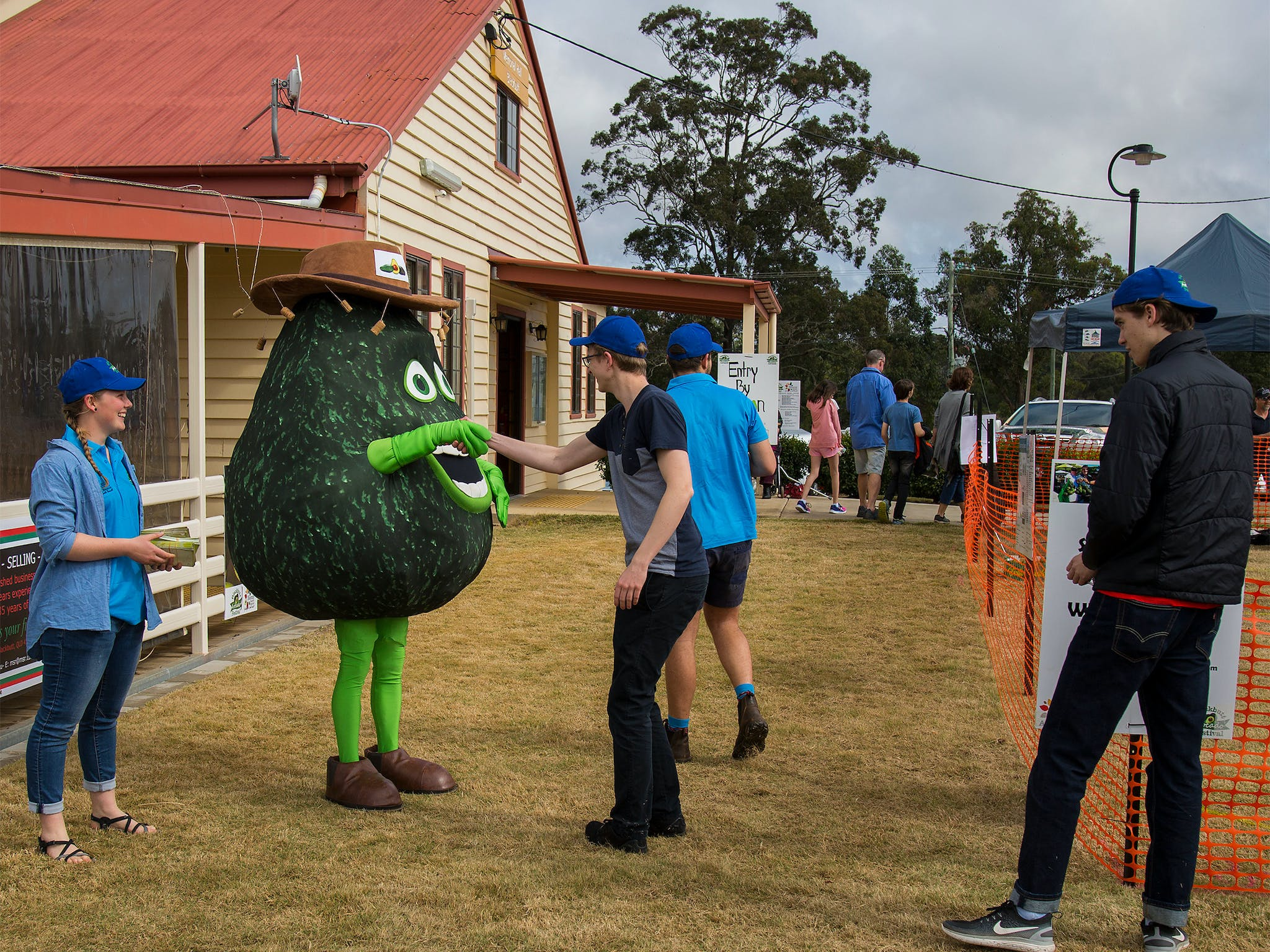 Alvin the Avo loves a chat