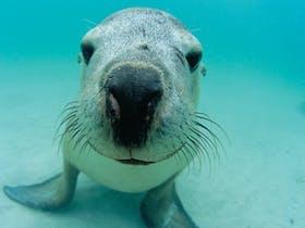 Shoalwater Marine Park, Western Australia