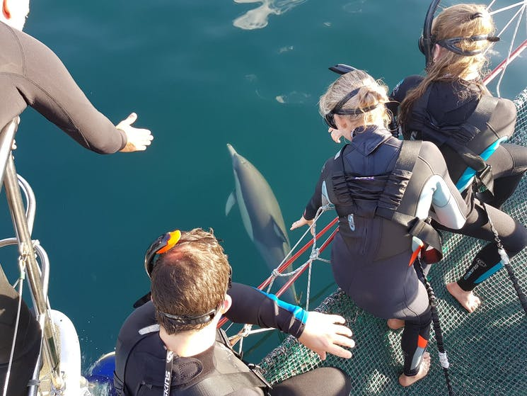Guests sit in a net waiting to be lowered  into the water to swim with wild dolphins, Port Stephens