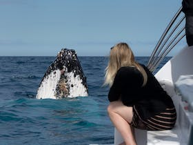 Hervey bay whales 2