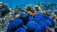 Frankland Island Reef Cruises