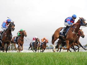 Christmas Cup Race Day Cover Image