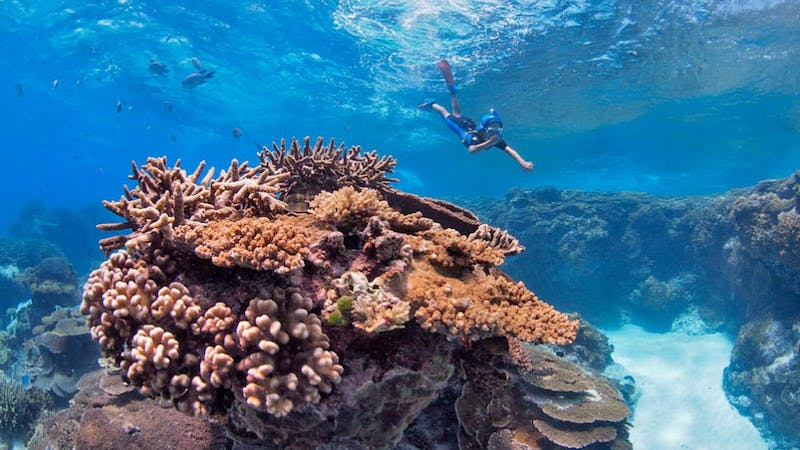 Great Barrier Reef Day Trip to Lady Elliot Island