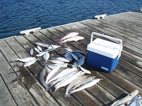 Fish caught on Triple Bay Charters