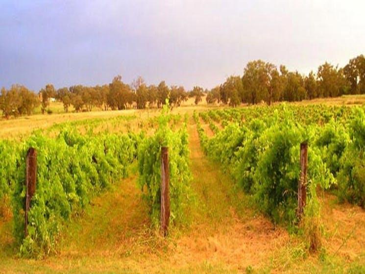 Bell River Estate Winery Wellington