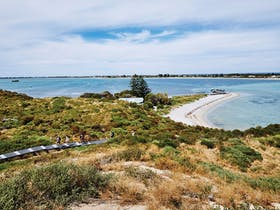 Penguin Island, Rockingham