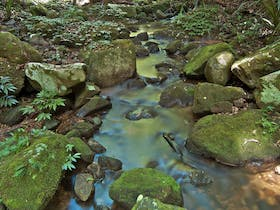 Whian Whian State Conservation Area