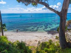 Shark Net Beach