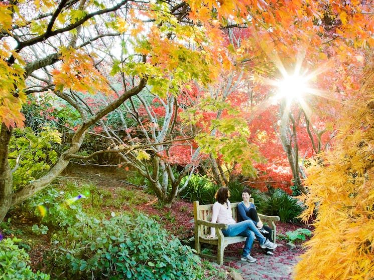 As a cool climate Garden all the seasons are breathtaking