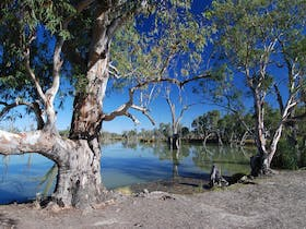 Loch Luna and Moorook Game Reserves Campgrounds