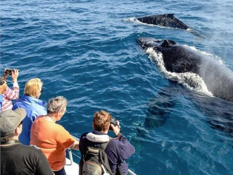 Whale Watching Cronulla