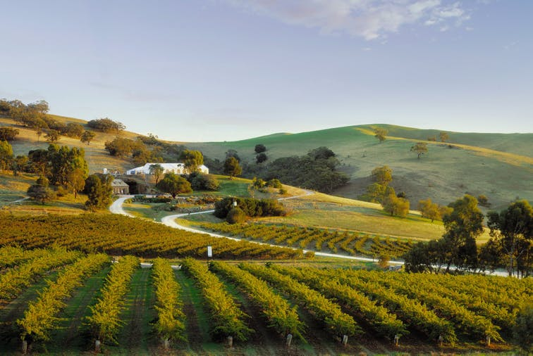 Barossa Valley an authentic journey