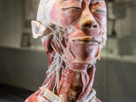 The Real Human Anatomy Exhibition
