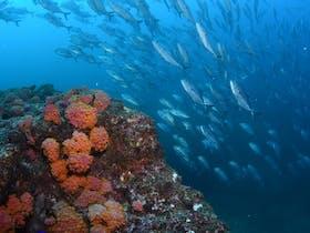 Barwon Banks Dive Site