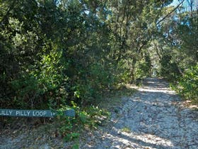 Lillypilly loop trail