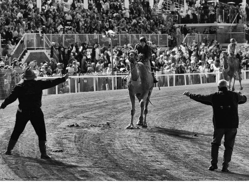 Image of the event 'Camel Races at Gosford Showground'
