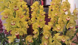 Image of the event 'Sapphire Coast Orchid Club Winter Orchid Show'