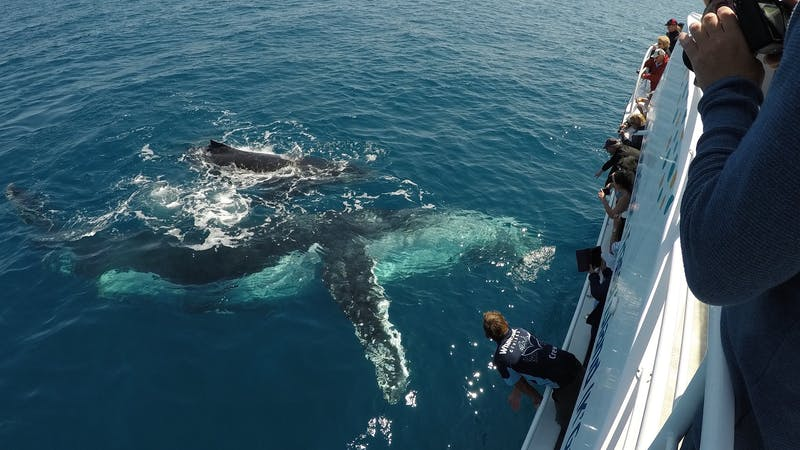 Whalesong Cruises – Whale Watching in Hervey Bay