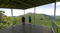 Mamu Rainforest tower creeks and canopies tour