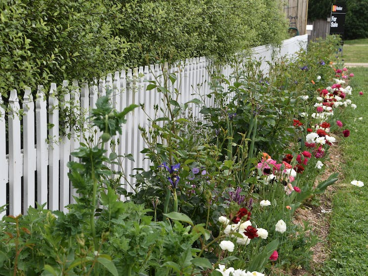 Front fence with flower border