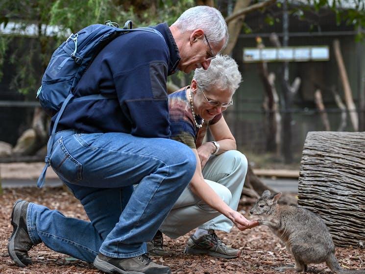 Seniors handfeeding kangaroos and wallabies at Featherdale