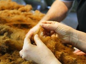 Examining alpaca fibre
