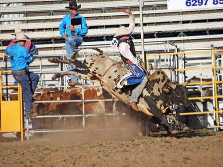 Patches Asphalt Queanbeyan Rodeo