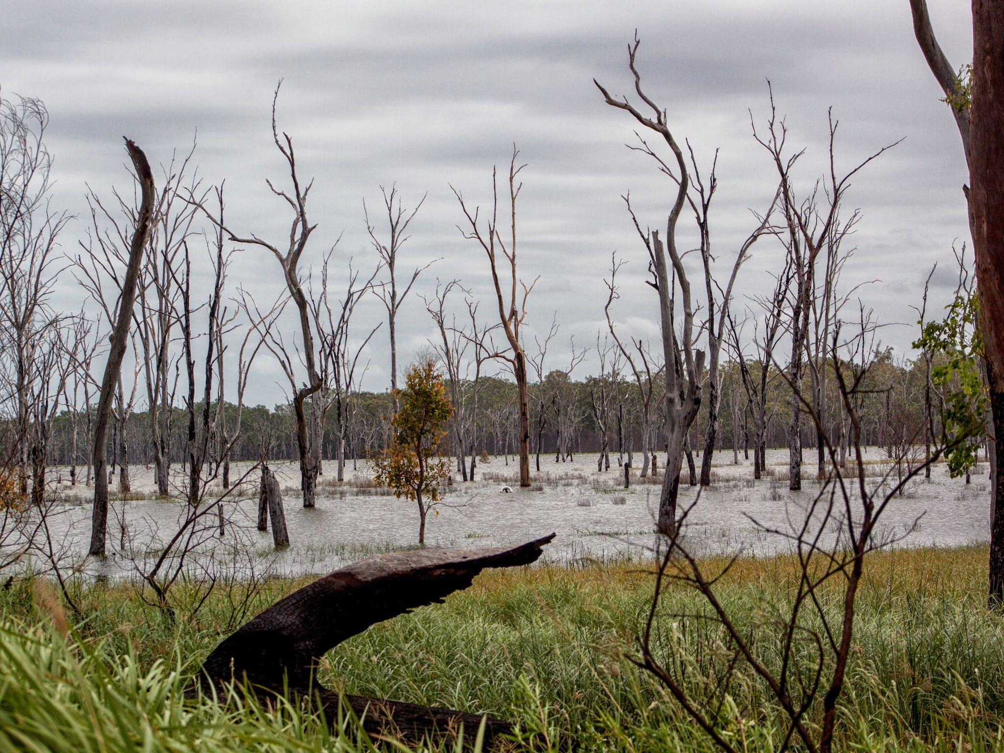 South Burnett, Wooroolin Wetland