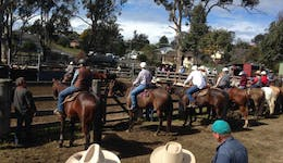 Image of the event 'Dungog Campdraft'