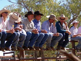 Ridgelands Campdraft - Central Queensland Campdrafting