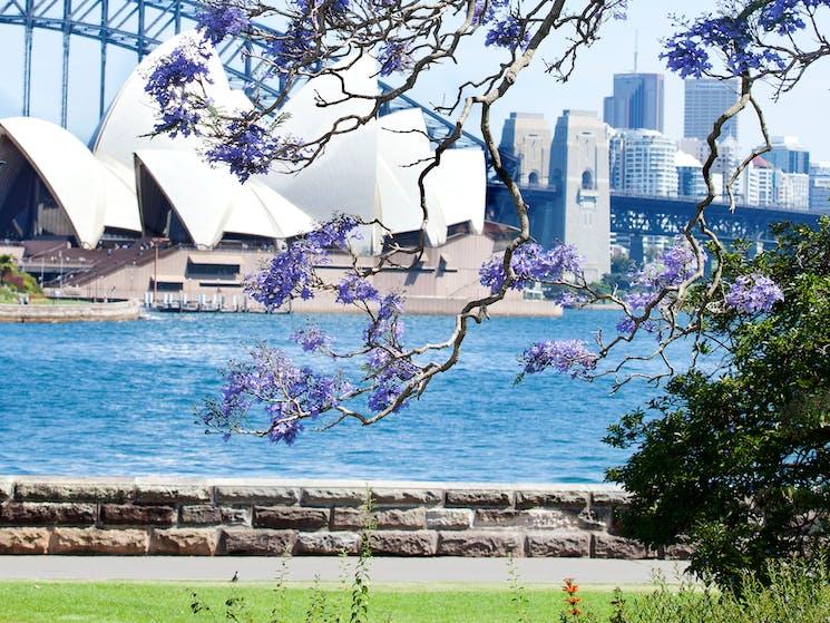 Royal Botanic Garden Sydney - Harbour View