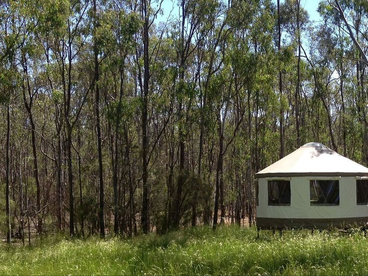 Glamping in the bush on the Murray River
